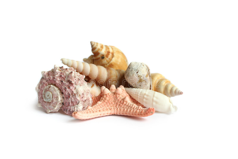 Download Seashells On White Background Royalty Free Stock Images - Image: 2313049