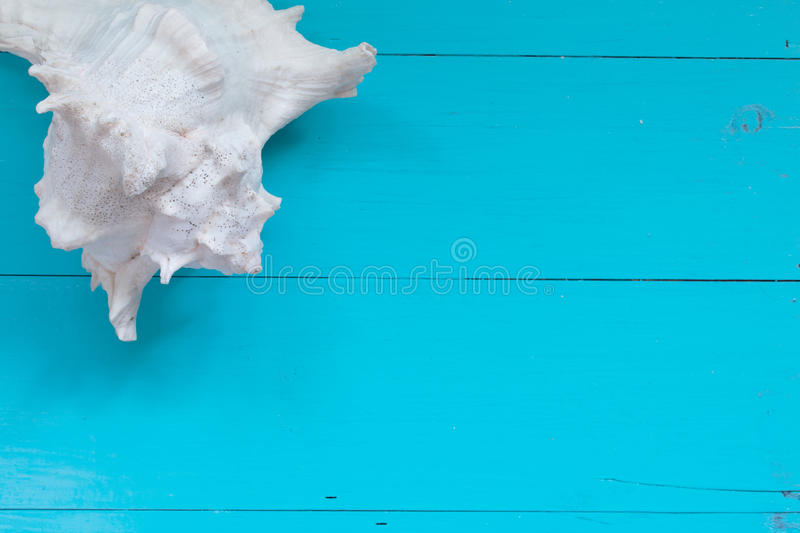 Download Seashells On Wood Background. Top View With Copy Space Stock Photo - Image of background, tropical: 83708986