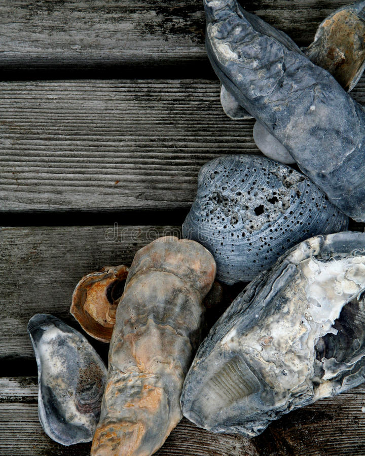 Download Seashells on Wood Deck stock image. Image of grey, gray - 18430329