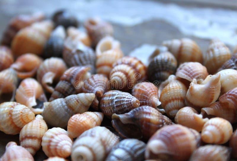 Seashells on wood royalty free stock photo