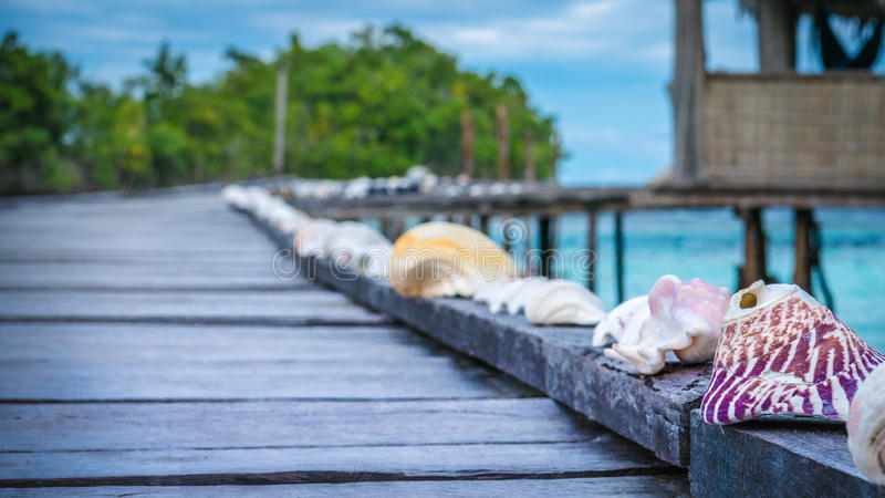 Seashells on Wooden Pier of an Homestay, Gam Island, West Papuan, Raja Ampat, Indonesia.  royalty free stock photography