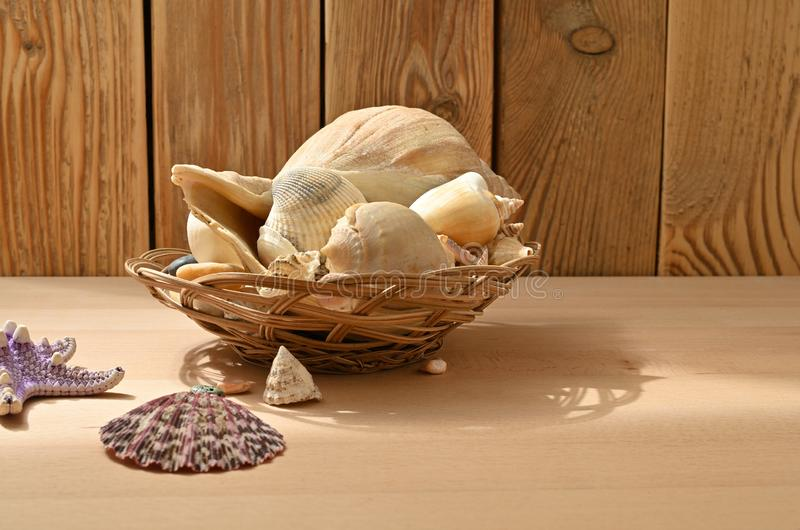 Seashells on a wooden table. Collection of sea mollusks. Shellfish decorations royalty free stock images