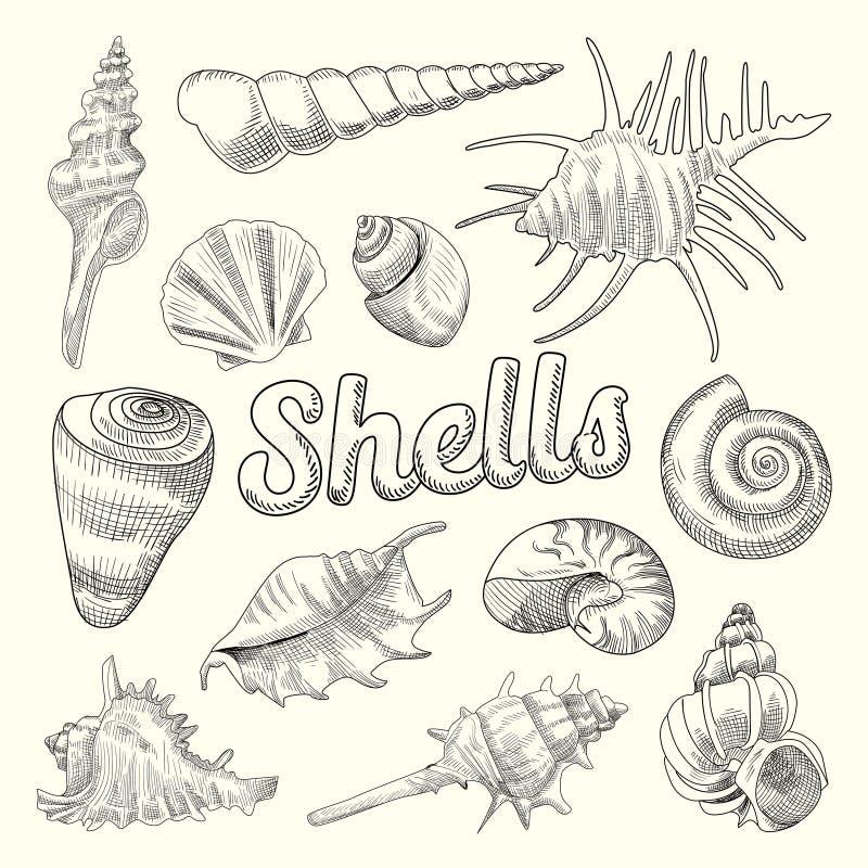 Seashells Wręczają Patroszonego Nadwodnego Doodle Morscy Denni Shell Odosobneni elementy ilustracji