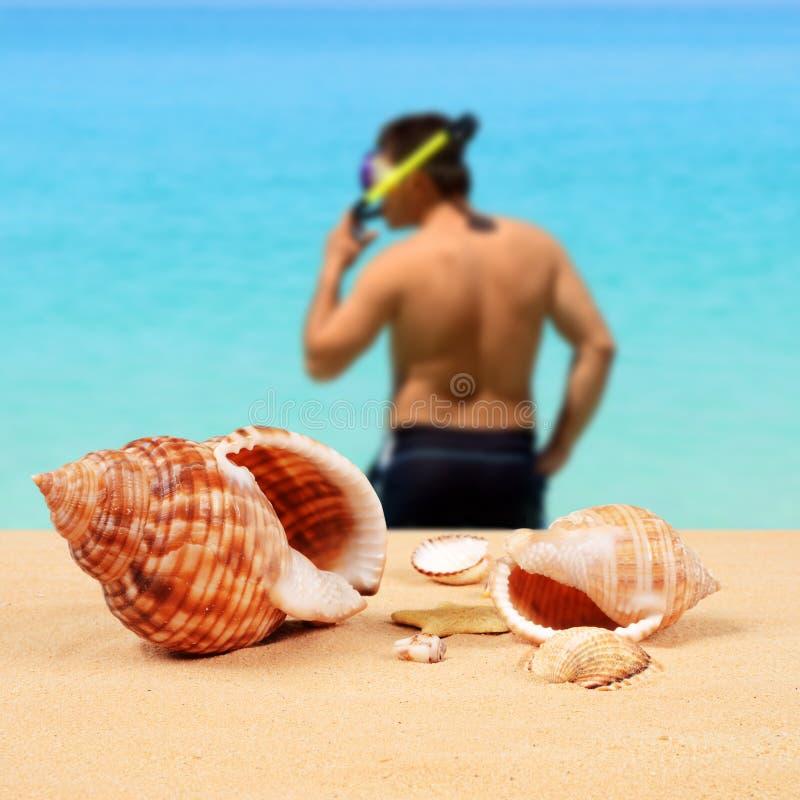 Seashells y buceador en la playa imagen de archivo libre de regalías
