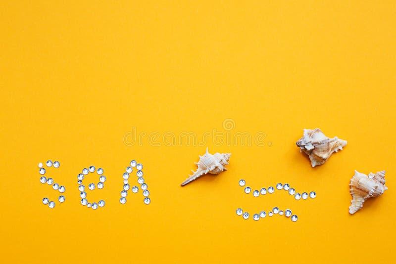 Seashells on yellow background. Symbol of summer stock photo