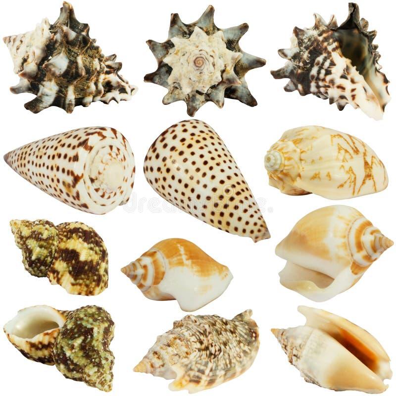 Seashellsansammlung lizenzfreie stockfotografie