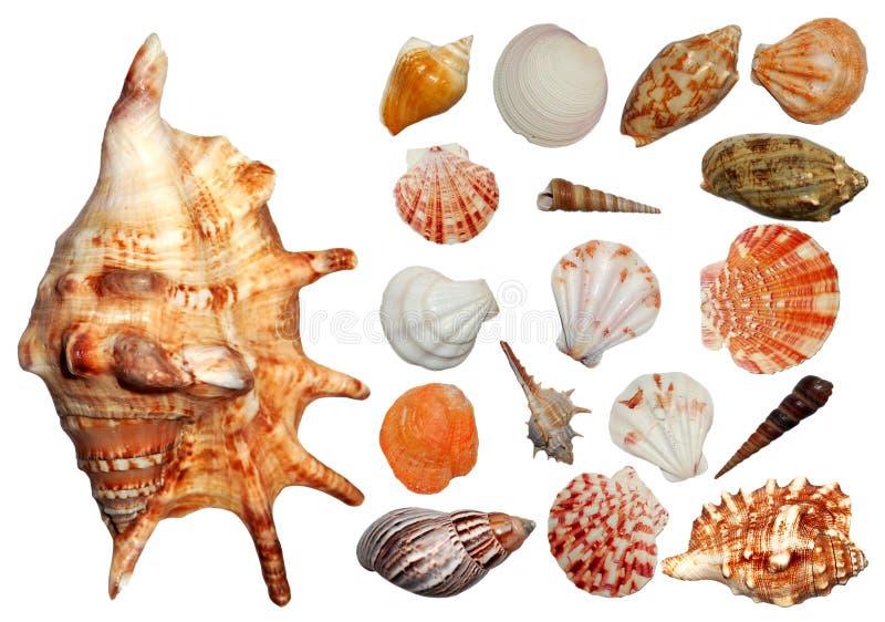 Seashellsansammlung stockfoto