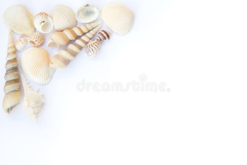 Seashellsfeld stockfotos