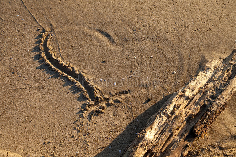Download On the seashore stock image. Image of water, love, sunrise - 28296375