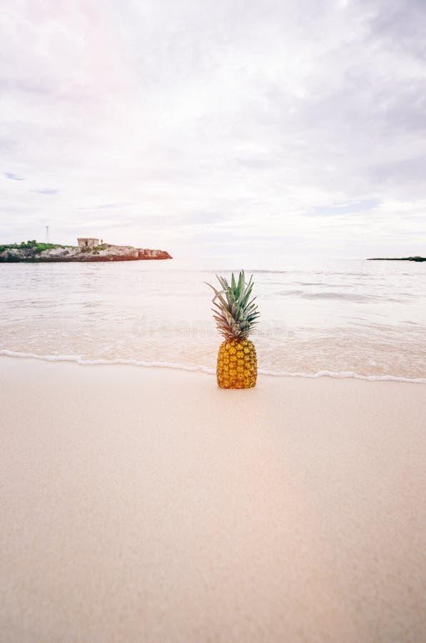 Плодоовощ ананаса на Seashore во время дневного времени стоковые изображения rf