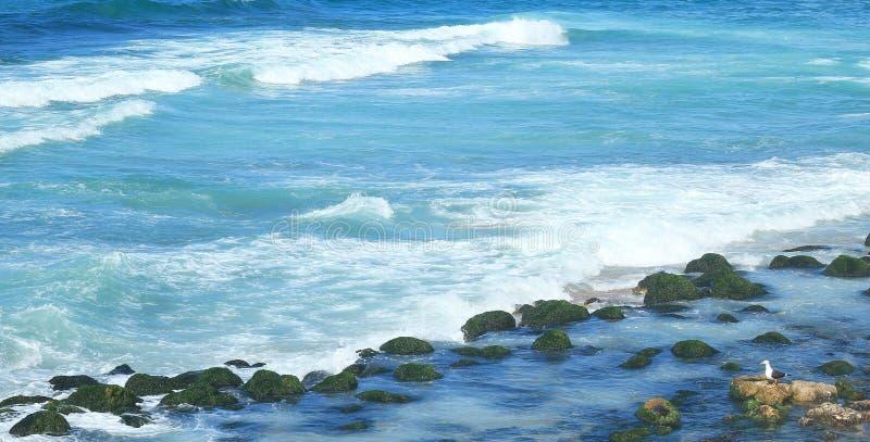 Seashore in Alexandria royalty free stock images