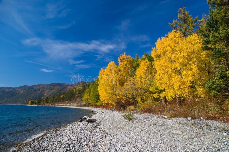 Seashore and autumn trees royalty free stock photos