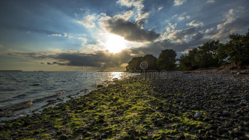 Seashore at Everglades National Park. royalty free stock photo