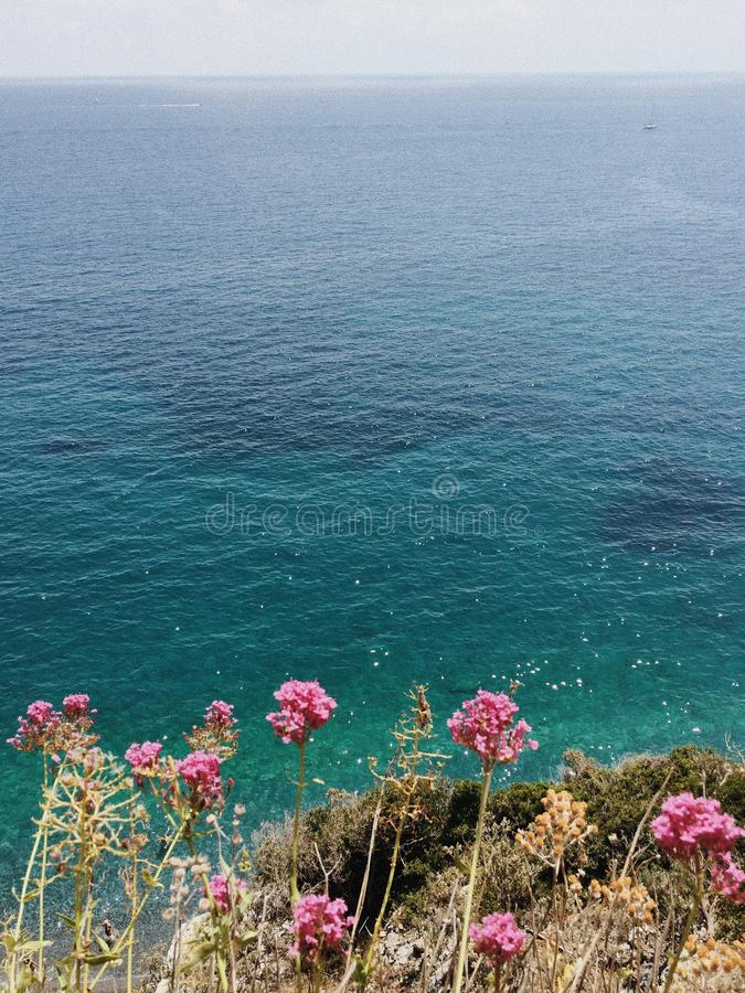 By the seashore. Hot midsummer day by the seashore in Liguria coast with pink flowers stock photo