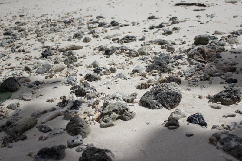 Seashore llife stock photos