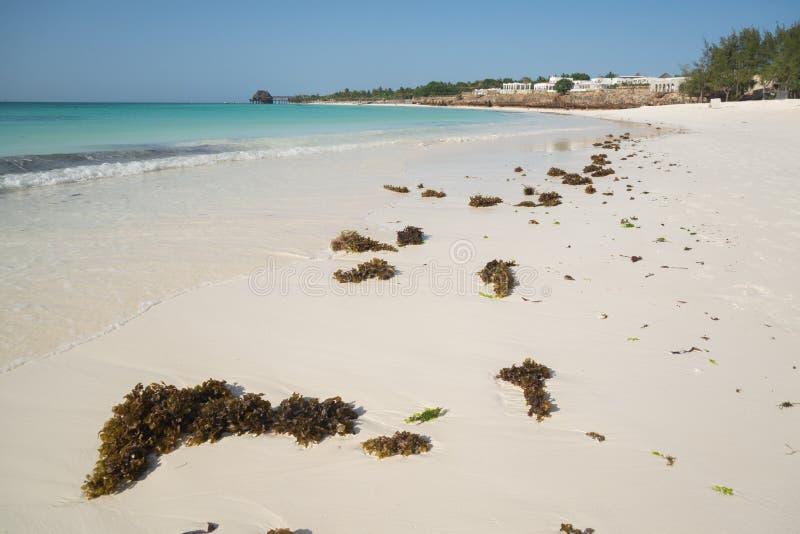Strand på Zanzibar royaltyfri foto