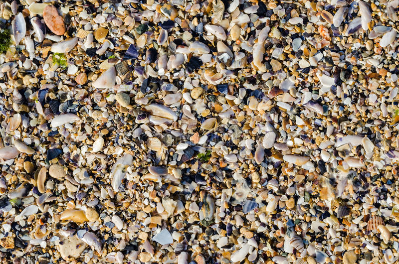 Seashore With Sea Shells royalty free stock images