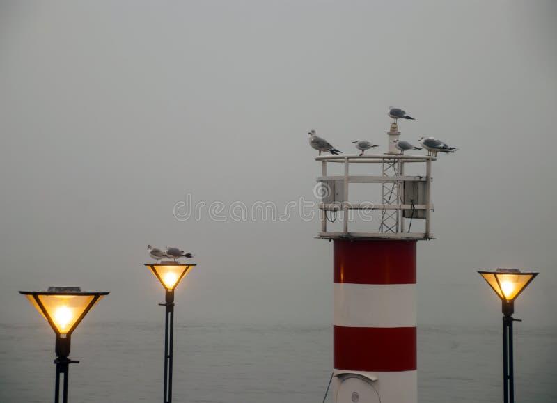 Seashore, wieczór, mgła, latarnia morska, światła, seagulls, romans obraz stock