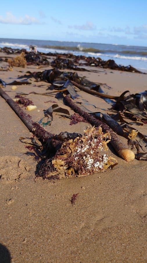 Seaside immagini stock libere da diritti