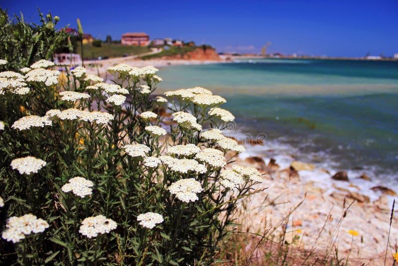 Seaside flowers stock image