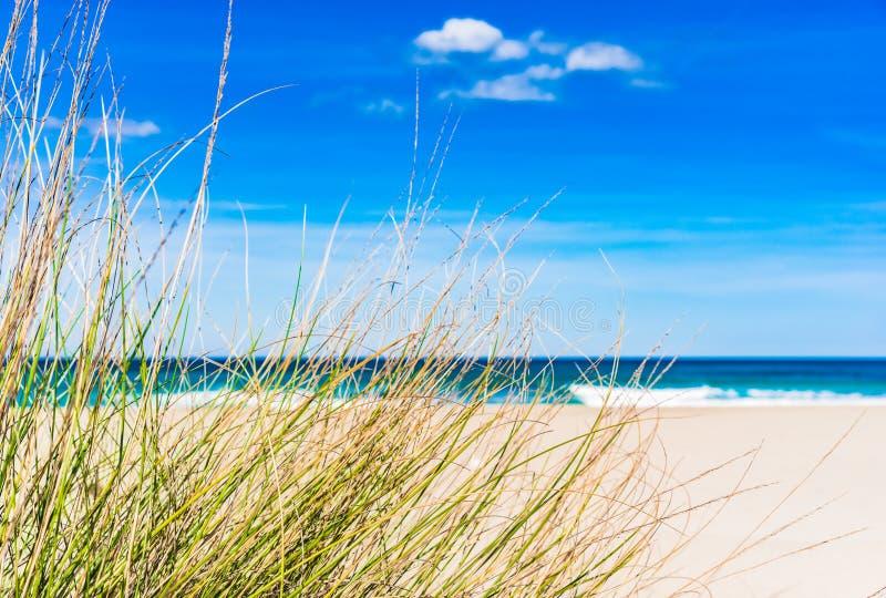 Seaside island scenery, beautiful sand dunes beach. Maritime sea landscape sand dune beach wit marram grass and blue sky stock image