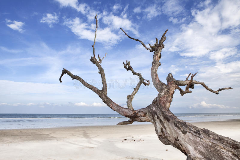 Seaside landscapes. Down trees on the beach scenery royalty free stock photography