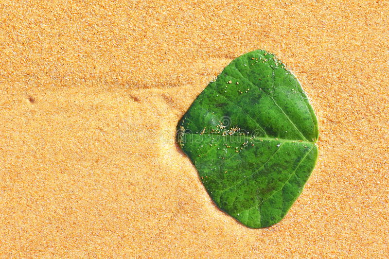 Download Green leaf in golden sand stock photo. Image of drift - 26806808
