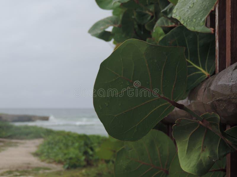Seaside Scenery stock image