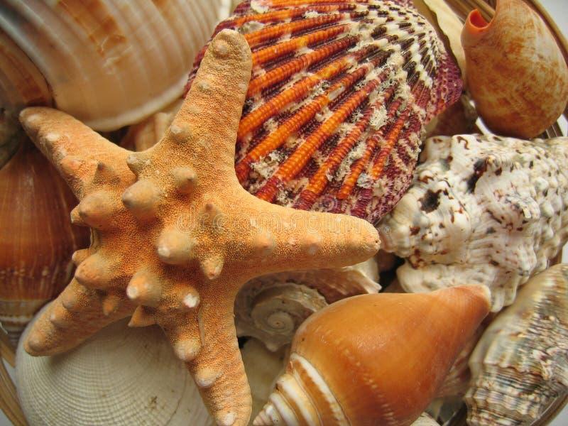 Seaside Selection. Closeup of starfish, shells etc