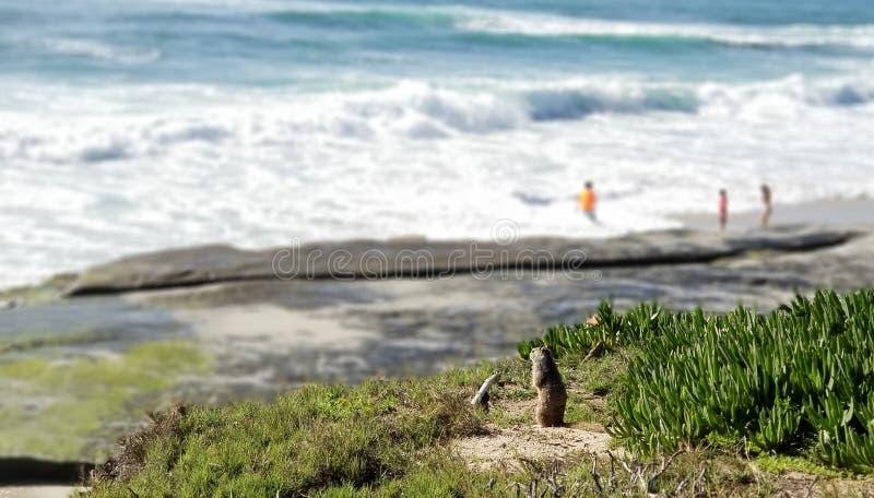 Seaside Series - Pacific Ocean Waves stock photo
