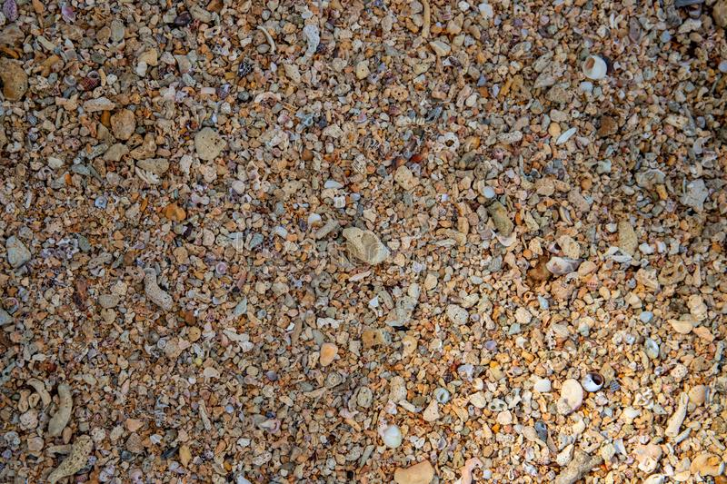 Seaside shells and pebbles texture photo. Coral and shells in sand seaside under tropical sun stock image