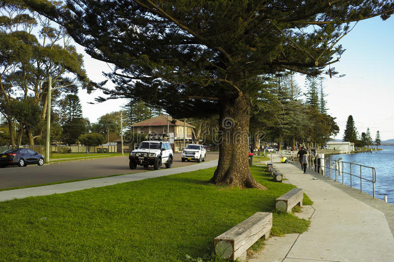 Seaside sidewalk with big trees and fishing shop royalty free stock photos