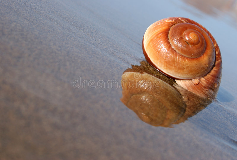 Seaside Snail royalty free stock photography