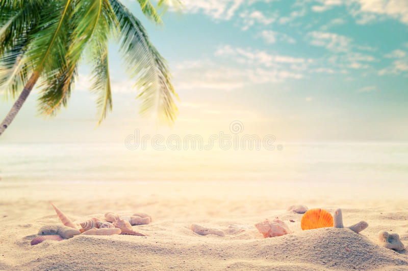 Seaside summer beach with starfish, shells, coral on sandbar and blur sea background royalty free stock image