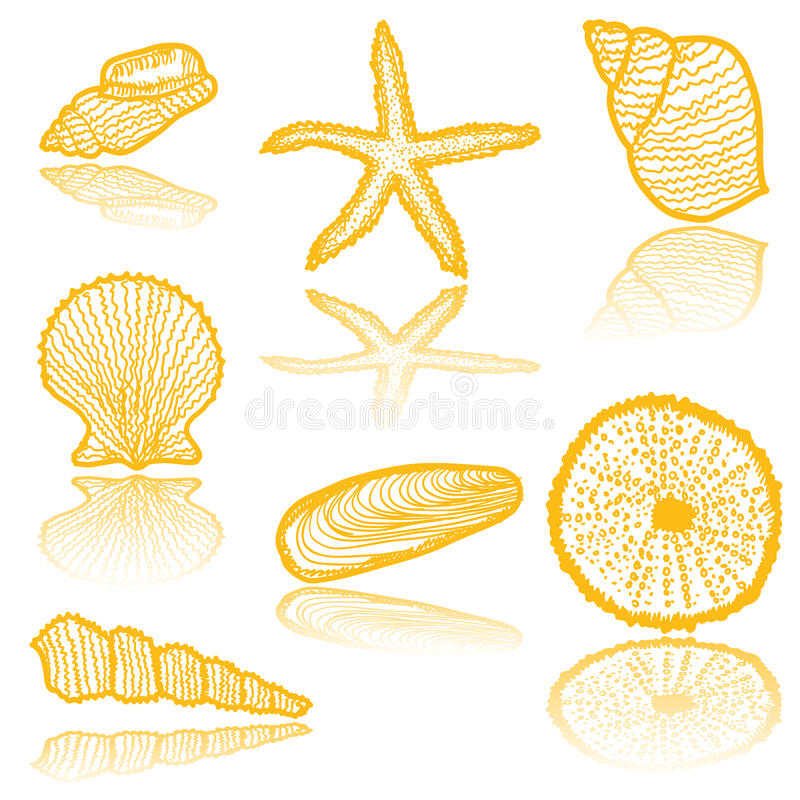 Seaskell sketches. Collection of hand-drawn seashells royalty free illustration