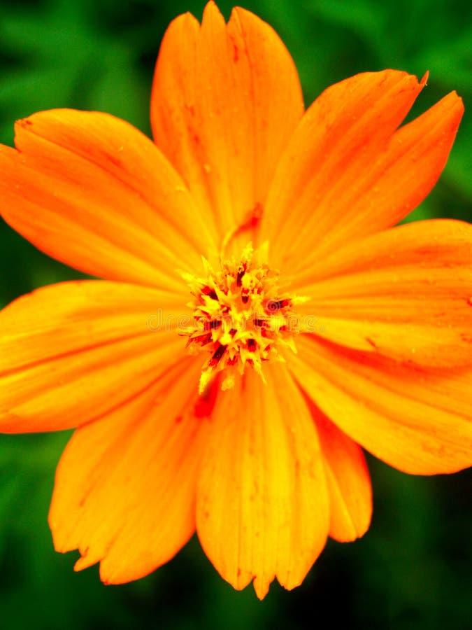 Download Season Flower Royalty Free Stock Image - Image: 904276