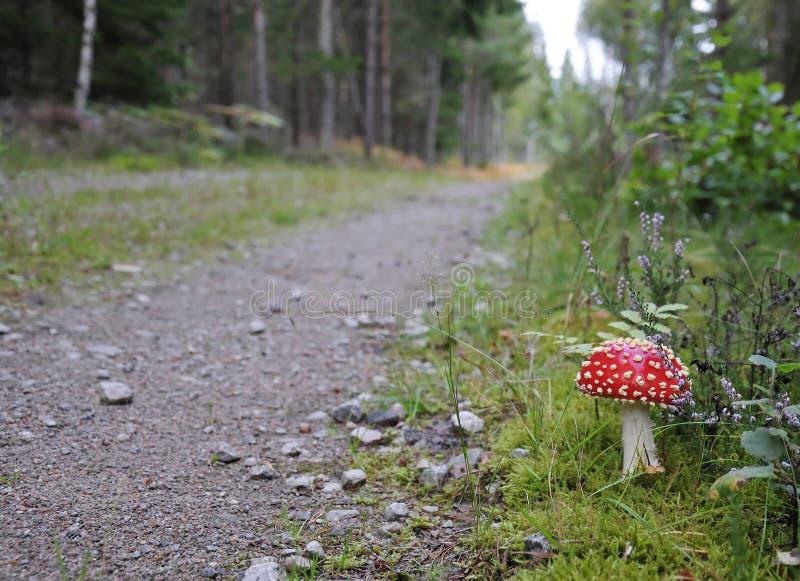 Season forest road stock photos