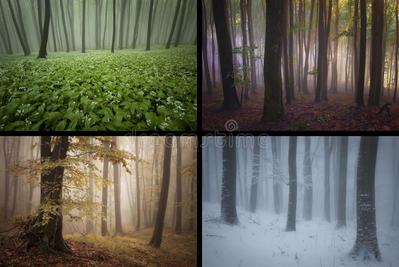 Season spring summer autumn winter in the forest with fog. Season spring summer autumn winter in the mysterious forest with fog royalty free stock photo
