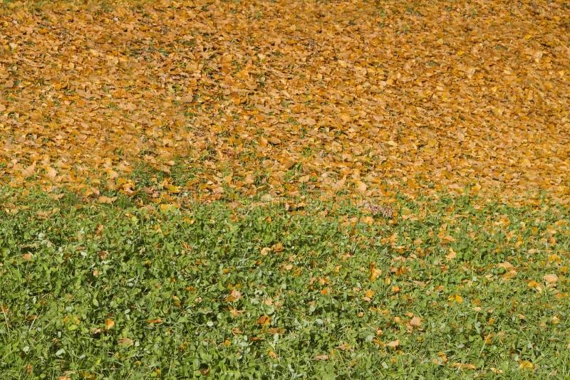 Season is summer-autumn in nature. Fallen leaves on the slope. Season is summer-autumn in nature. Fallen leaves on the hillside royalty free stock images