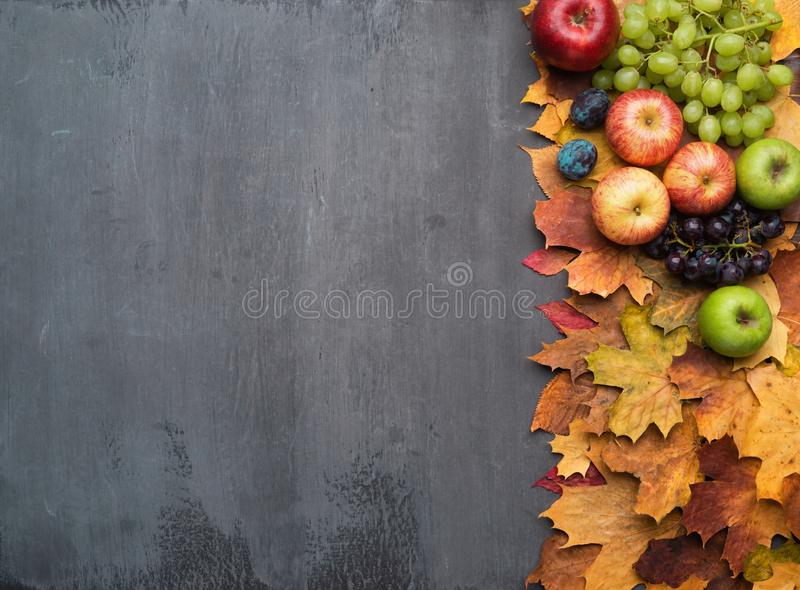 Seasonal autumn background. Frame of colorful maple leaves, grapes, peaches, nectarines, plums and apples. royalty free stock image