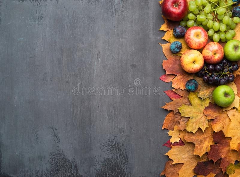 Seasonal autumn background. Frame of colorful maple leaves, grapes, peaches, nectarines, plums and apples. Seasonal autumn background. Frame of colorful maple stock images