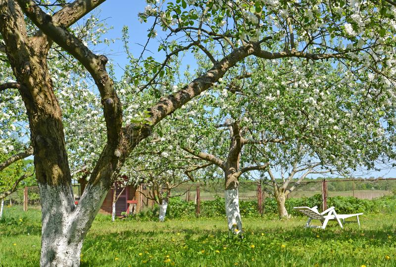 The seasonal dacha with the blossoming apple-trees. Spring.  royalty free stock photography