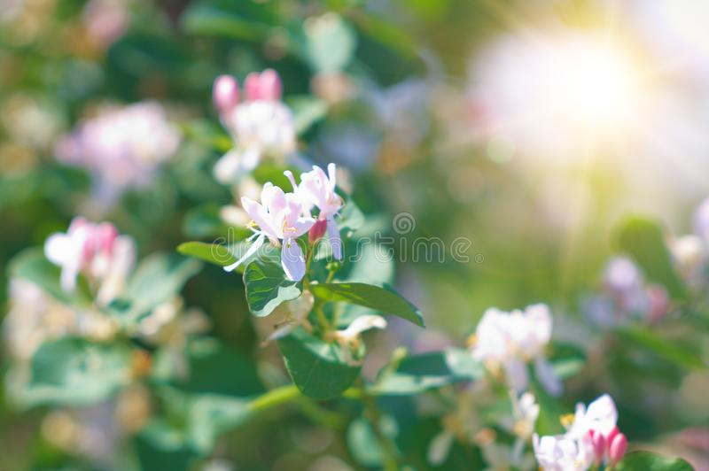 Download Seasonal differences stock image. Image of spring, blossom - 15071087