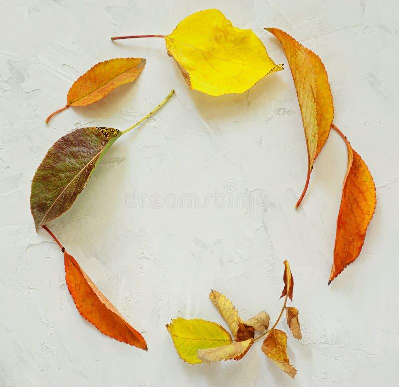 Seasonal frame of autumnal maple leaves isolated on white background stock photos