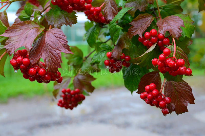 Seasonal fruit, fall harvest and medicinal plant concept. stock image