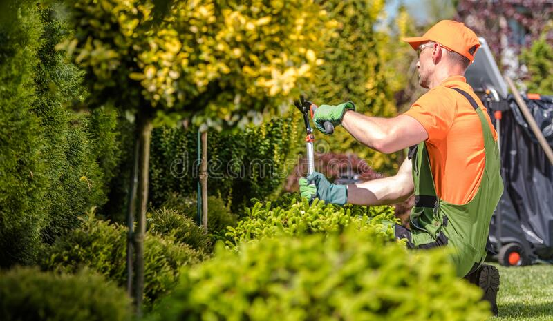 Seasonal Garden Trees Trimming. Caucasian Professional Gardener with Large Scissors in Hands stock image