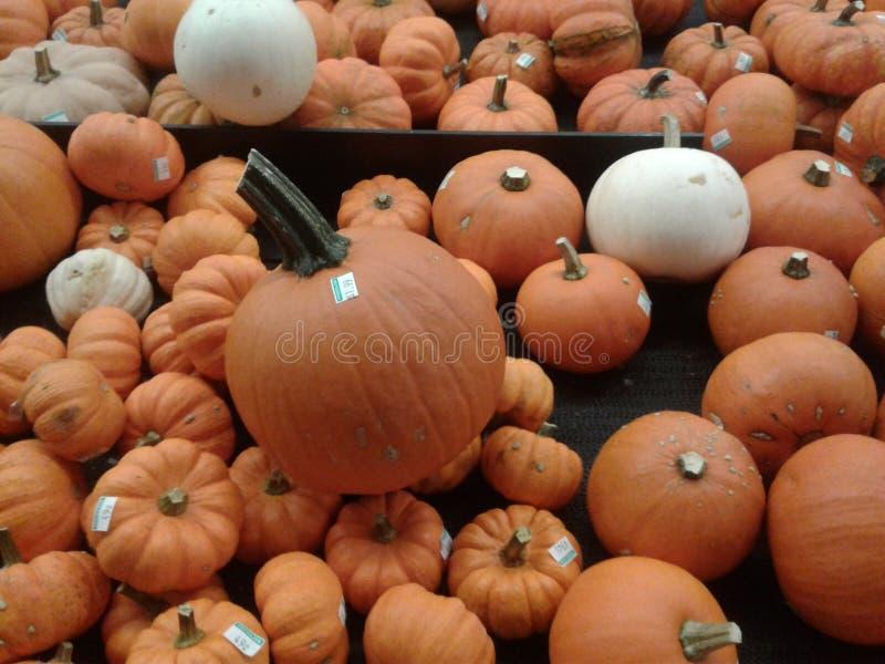 Seasonal Gourds royalty free stock image
