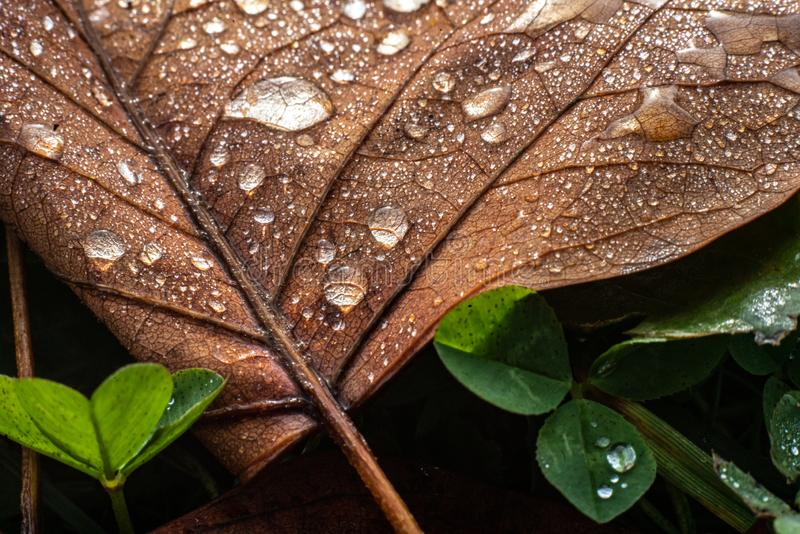 A colourful leaf with waterdrops in sunlight. Seasonal photograph of Autumn. A colourful leaf with waterdrops in sunlight stock photo