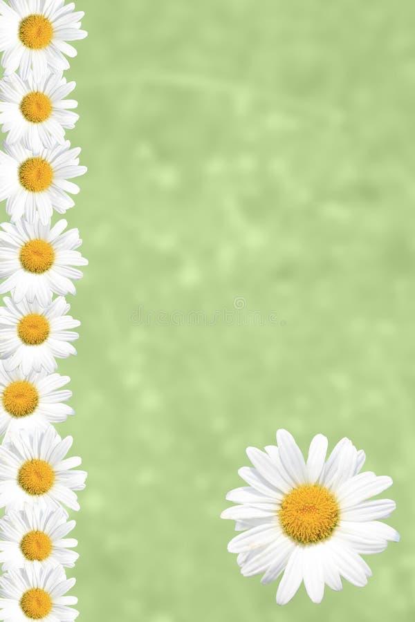 Seasonal Summer Daisy and Grass Background stock illustration