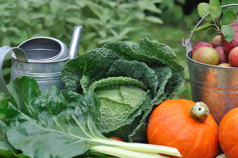Seasonal vegetable from garden stock photography
